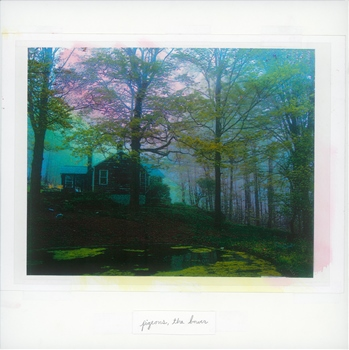 Pigeons – 'The Bower'