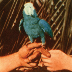 Andrew Bird – Are You Serious?