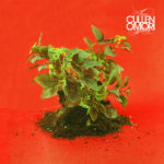 Cullen Omori – New Misery