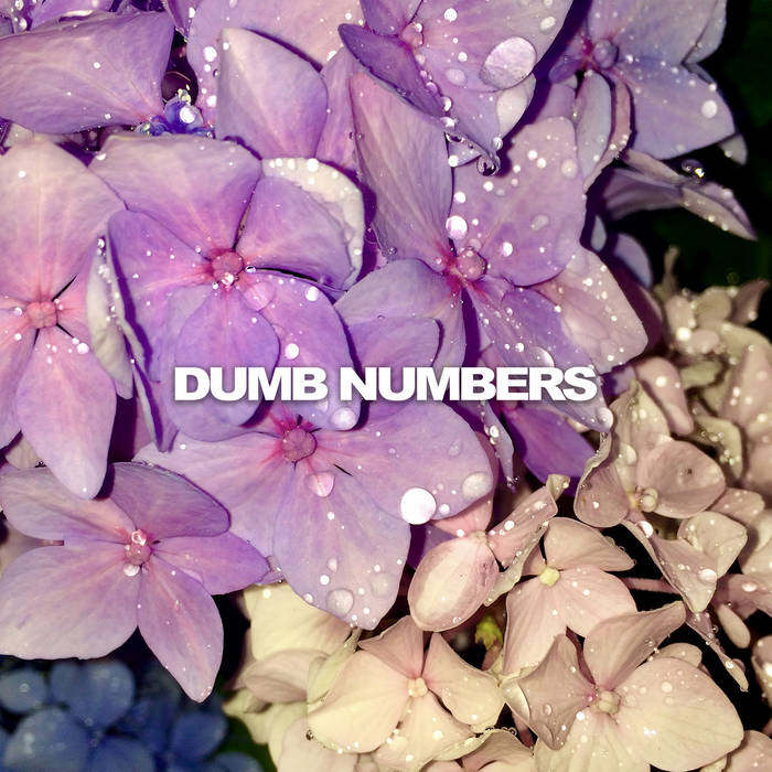 Dumb Numbers – 'Scars'